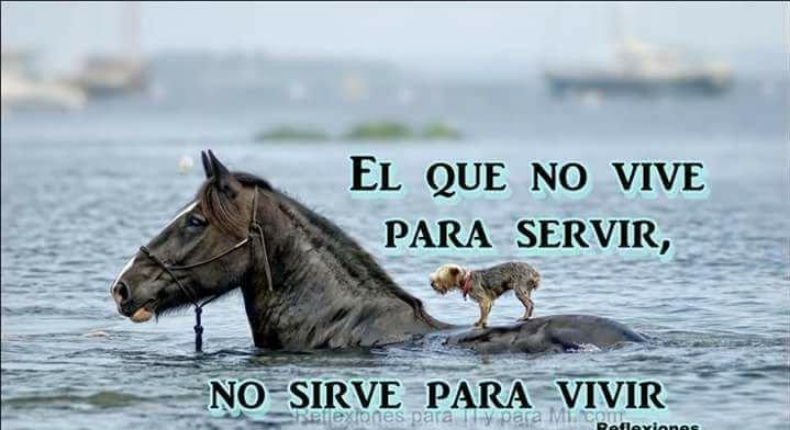 El que no vive para servir, no sirve para vivir__.jpg