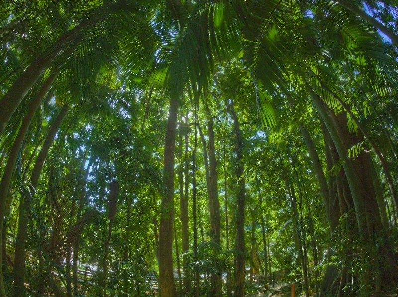 deep-rainforest-800px.jpg