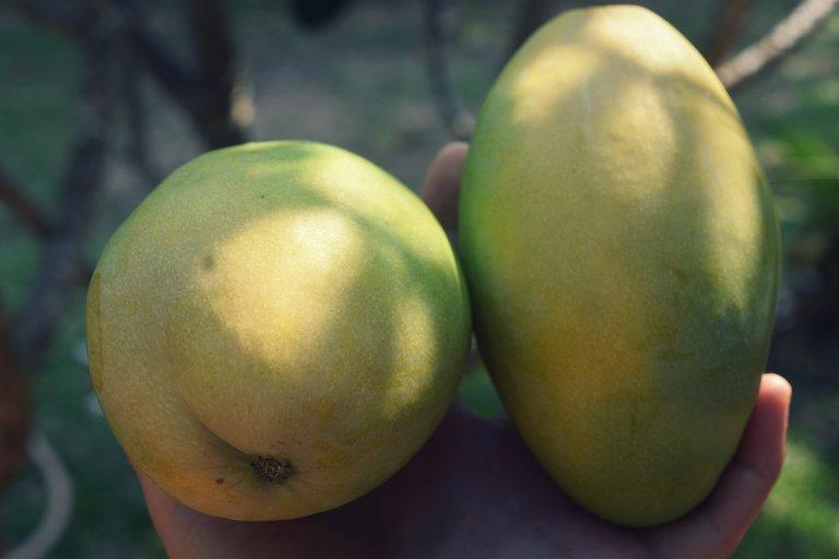 mango-turmeric-oats-1.jpg