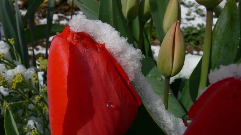 gartenblumen_im_schnee_8_.jpg