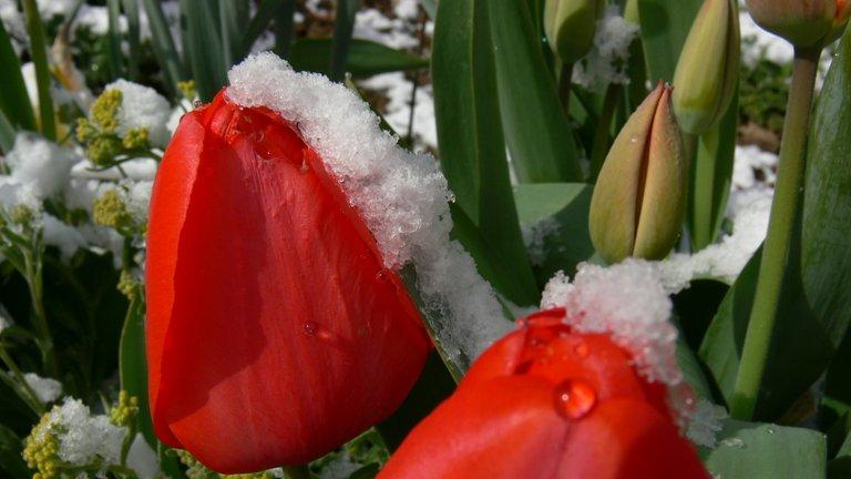 gartenblumen_im_schnee_7_.jpg