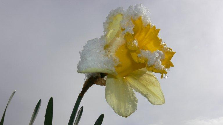 gartenblumen_im_schnee_4_.jpg