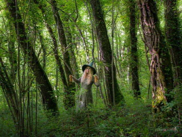 Forest Incantation_small.jpg