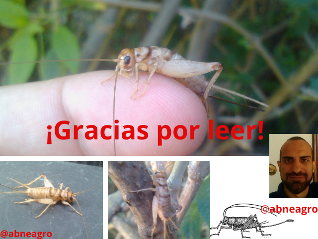 Orden Orthoptera final.png
