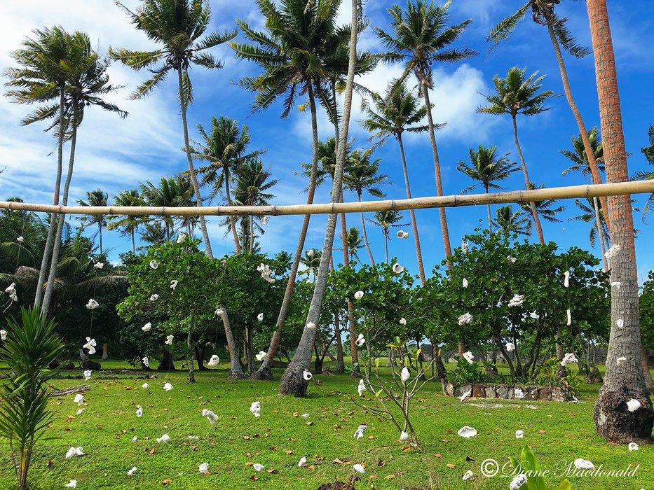 hanging shells marea anini.jpg