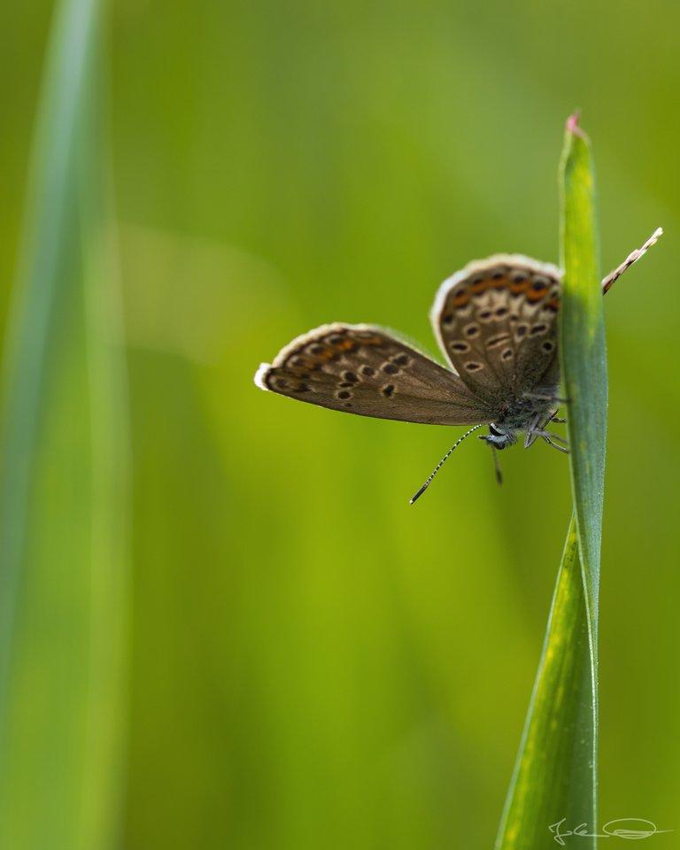 Hive AlphabetHunt Lycaenidae