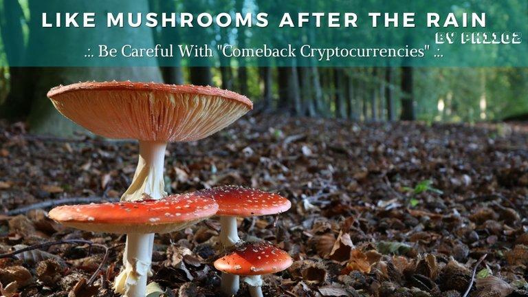 Like Mushrooms After the Rain.jpg