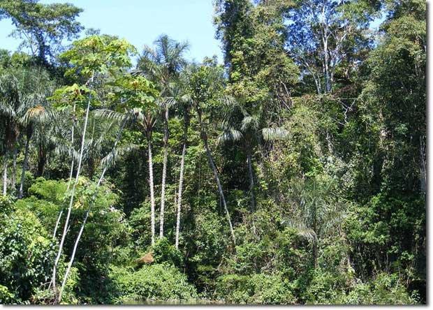 rsz_amazonian_rainforest_zps338d6b80.jpg