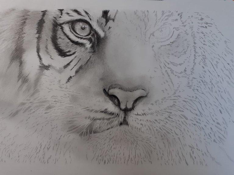 Tiger_WIP02.jpg