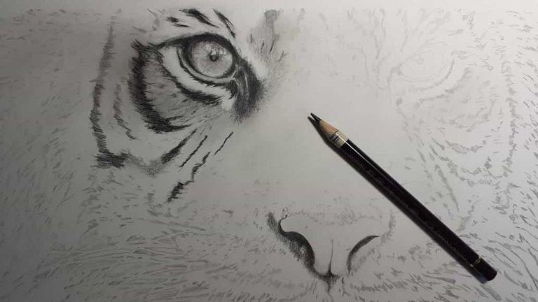 Tiger_WIP01.jpg