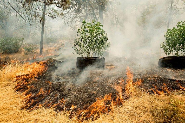 SR fires1.jpg