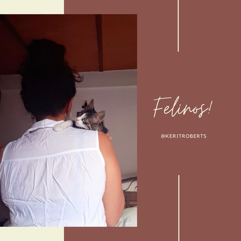 felinos.png