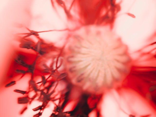 blossom13.jpg