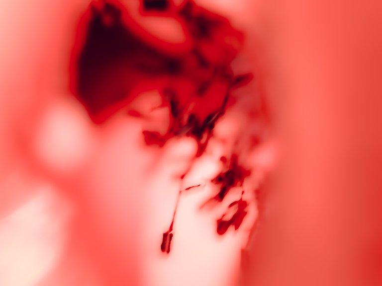 blossom15.jpg