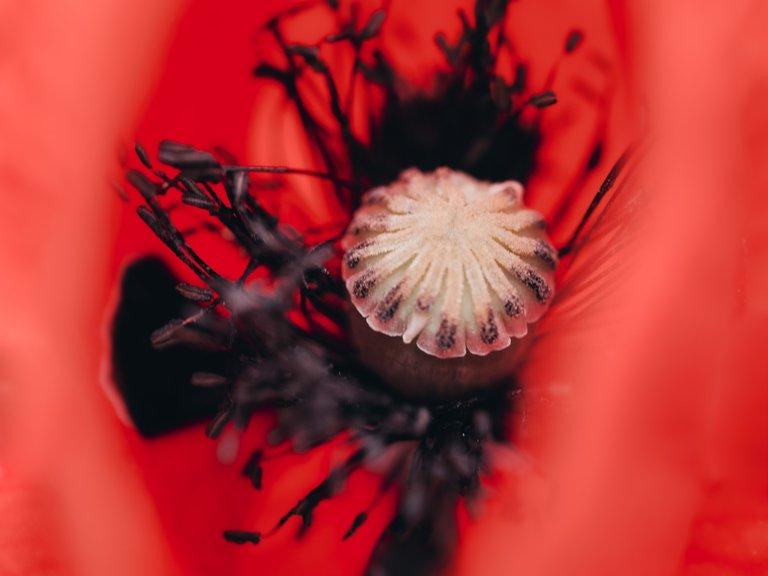 blossom12.jpg