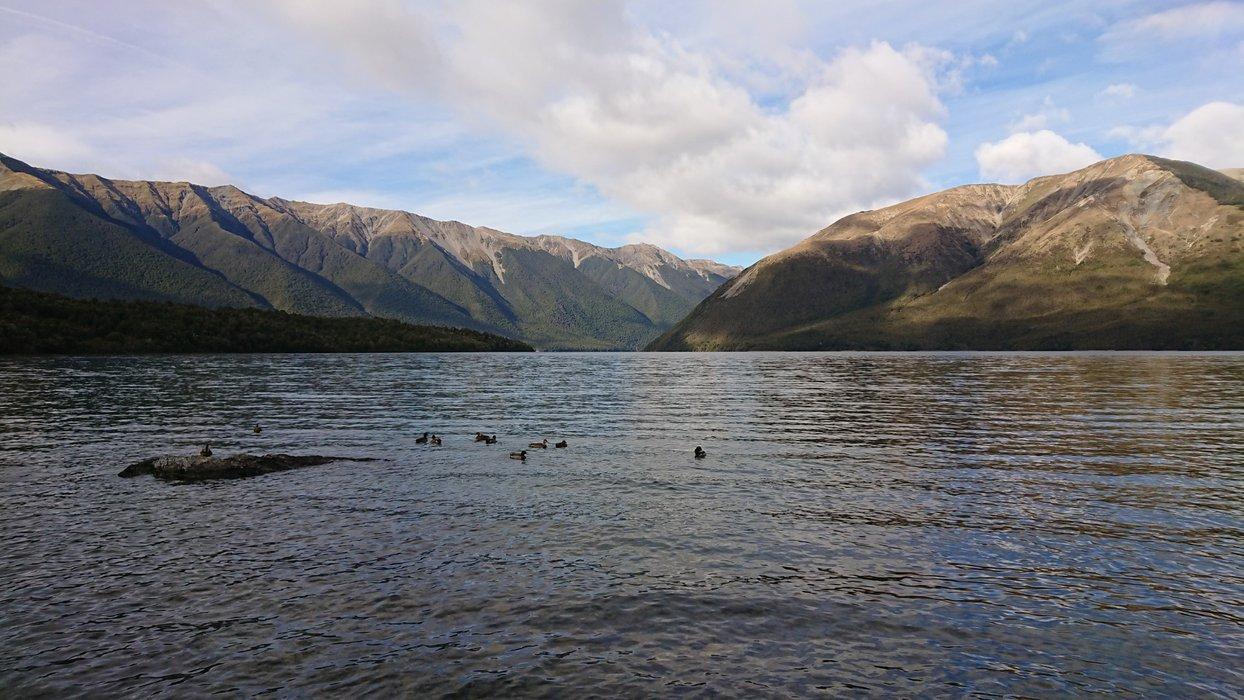Lake Rotoiti with ducks