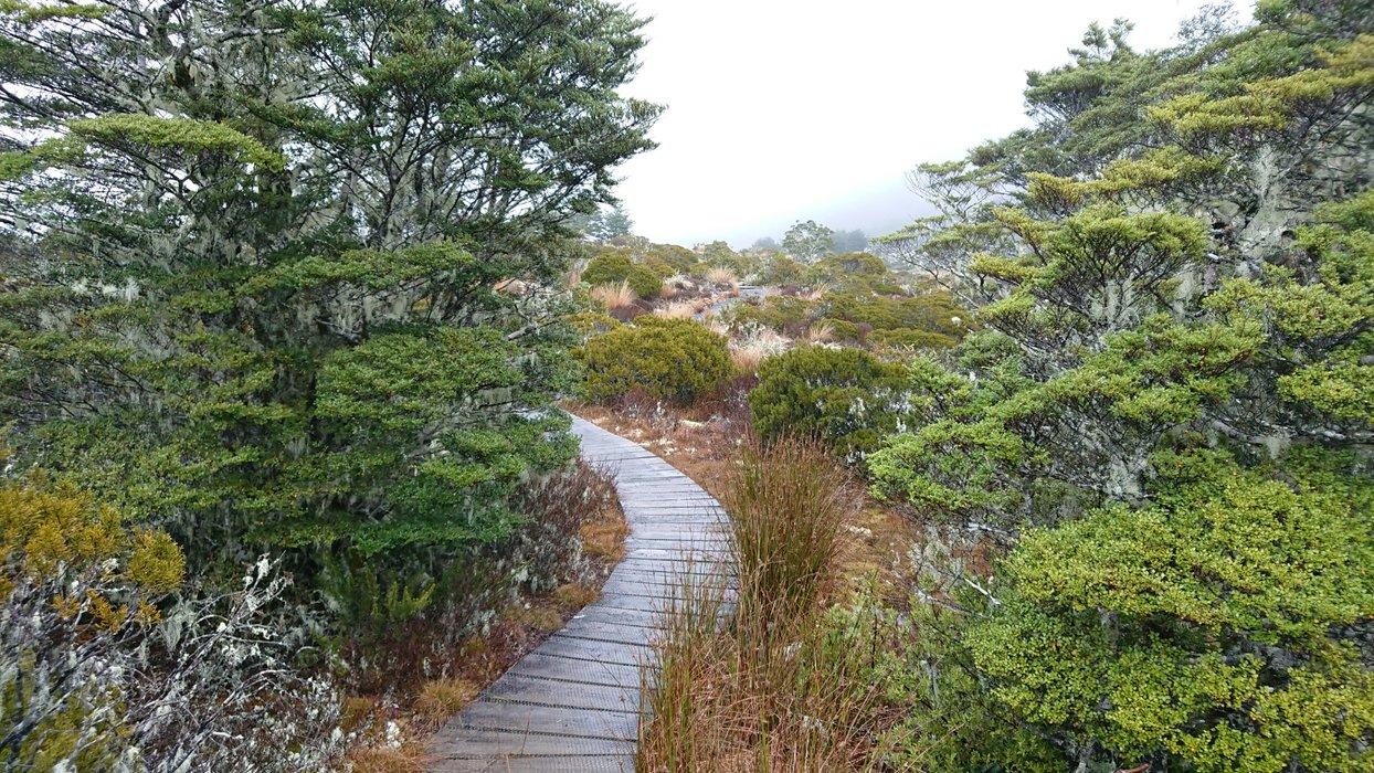 The boardwalk of the Alpine Nature Walk...