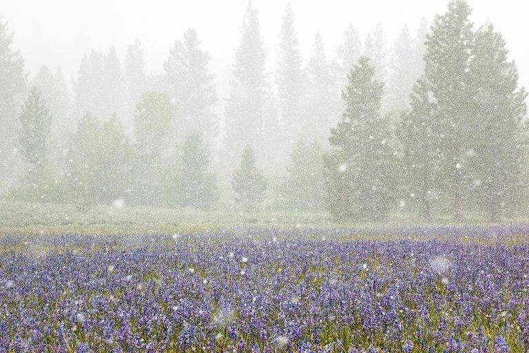 Snowy Sagehen Meadows 2(3).jpg