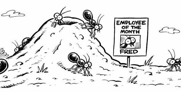 animals-ants-ant-employee-works-workers-dcln68_low.jpg