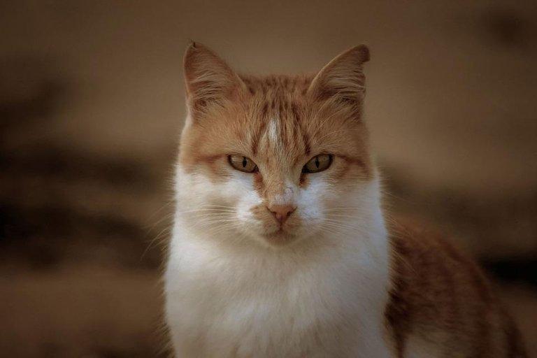 cat-4693450_960_720.jpg