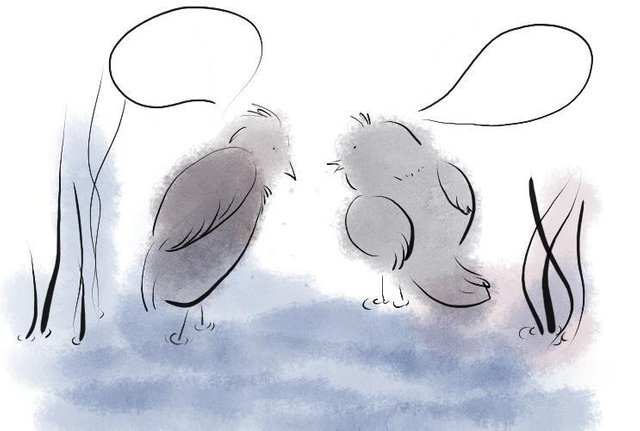 birds in water.jpg