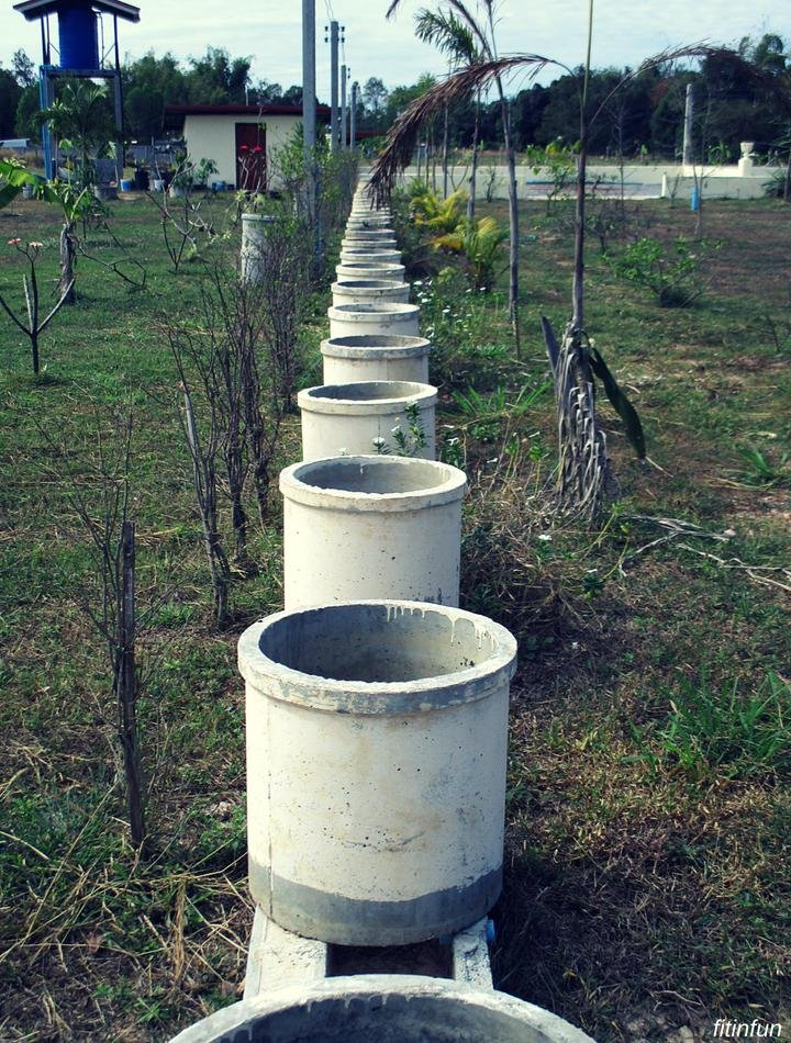 shape planters to be Northern thailand fitinfun (1).jpg