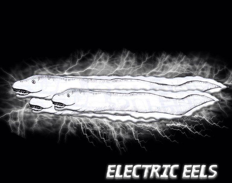 Electrics Eels.jpg