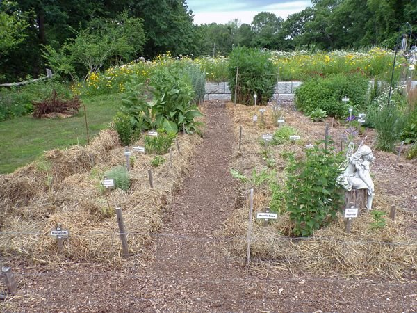 New Herb - Rows 1 and 2 done crop June 2021.jpg