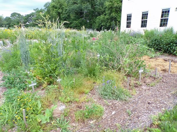 New Herb - 5 more to go crop June 2021.jpg