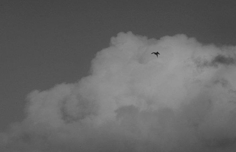 SkyBird.jpg