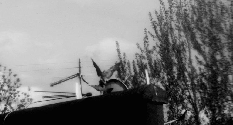 BirdButtle.jpg