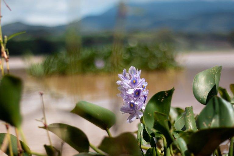Laguna.jpg