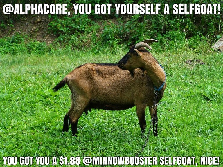 @alphacore got you a $1.88 @minnowbooster upgoat, nice!
