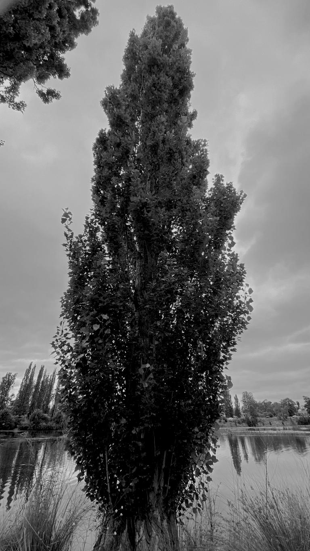 monomad tree2.png