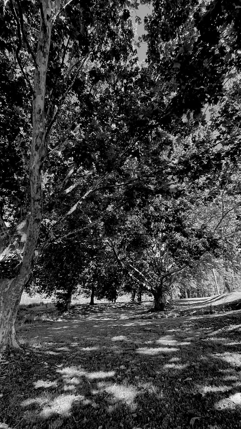 monomad tree4.png