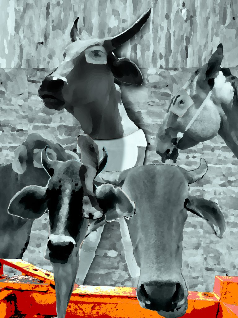 cabeza de vaca 11.jpg