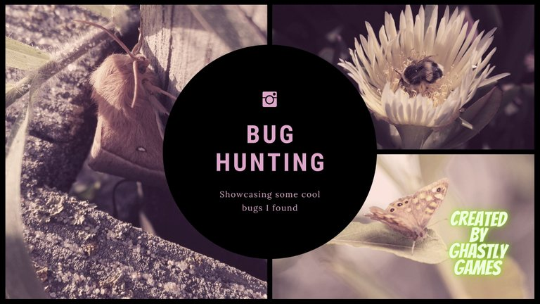 Bug Hunting Hive.jpg