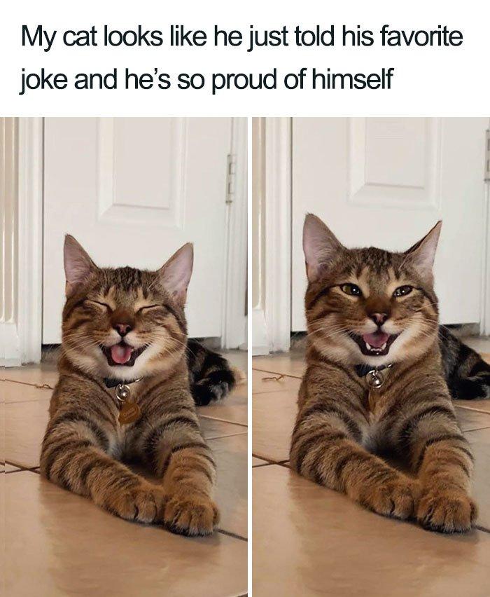 cat telling jokes.jpg