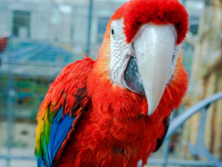 BirdPark 14.JPG
