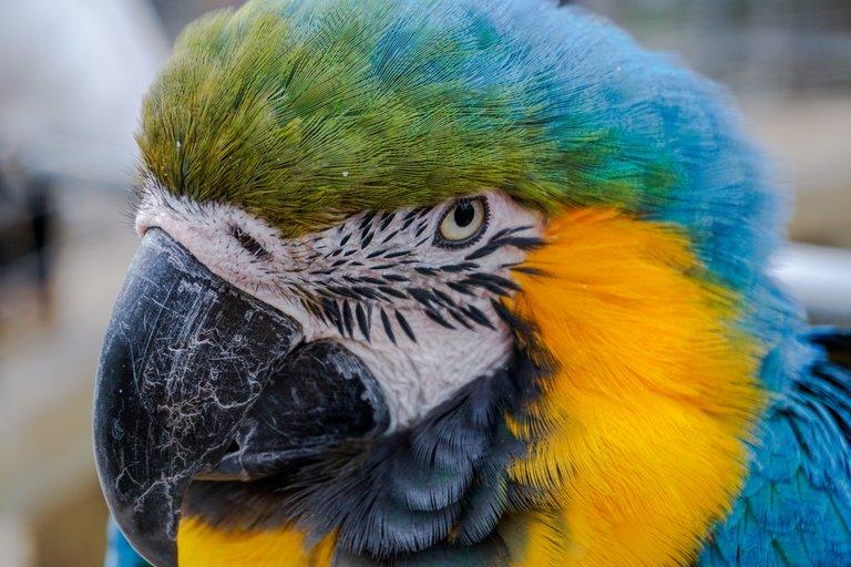 BirdPark 11.JPG