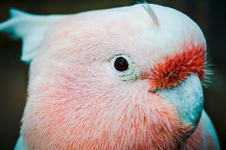 BirdPark 12.JPG