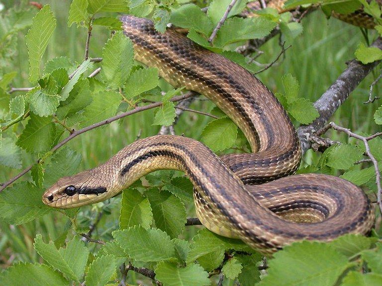 snakeintree.jpg