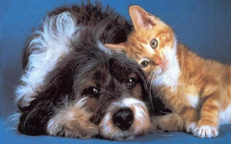 Gato y perro felices
