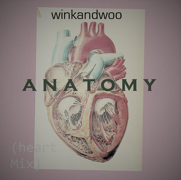 Anatomy by winkandwoo