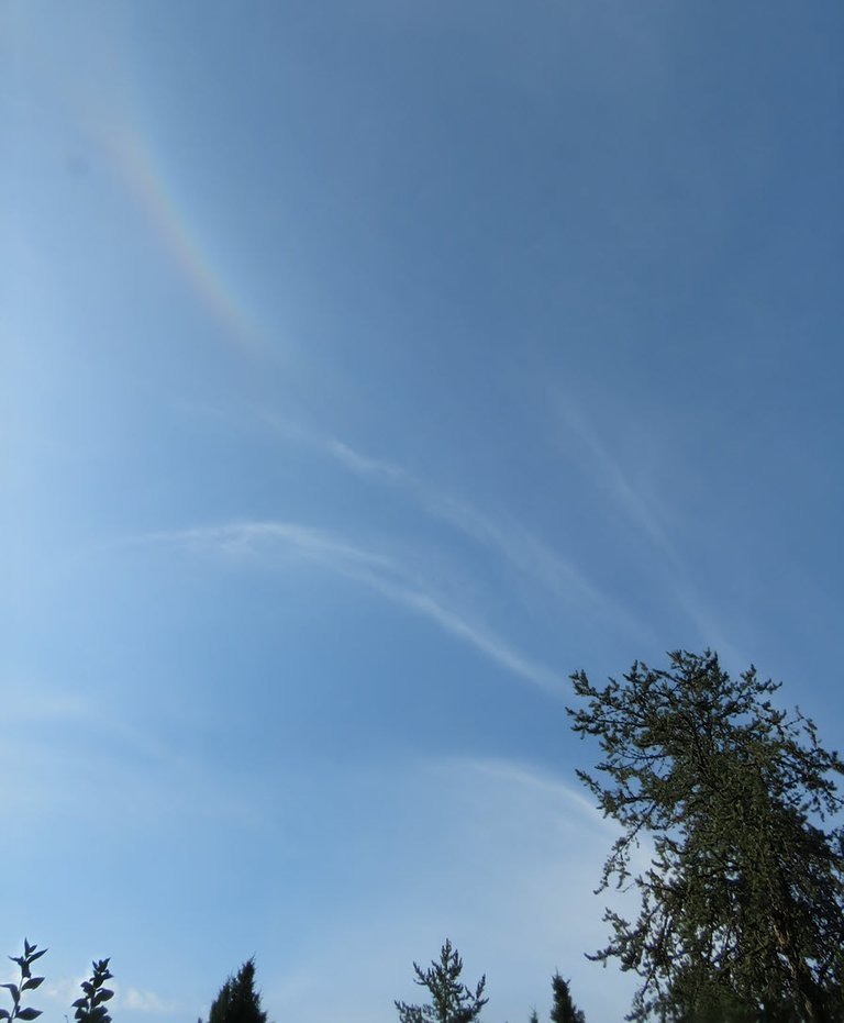 from top of pine tree wisps of cloud and a slight rainbow above.JPG