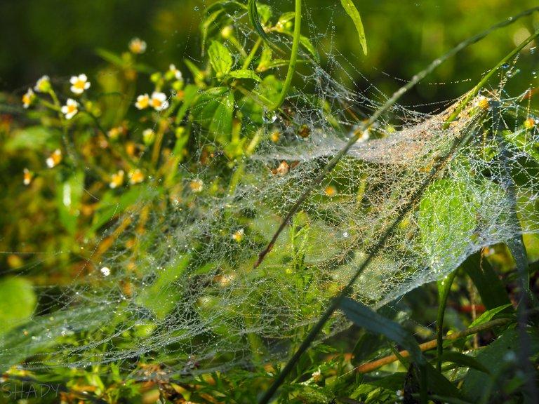 сріблясте павутиння 1.jpg