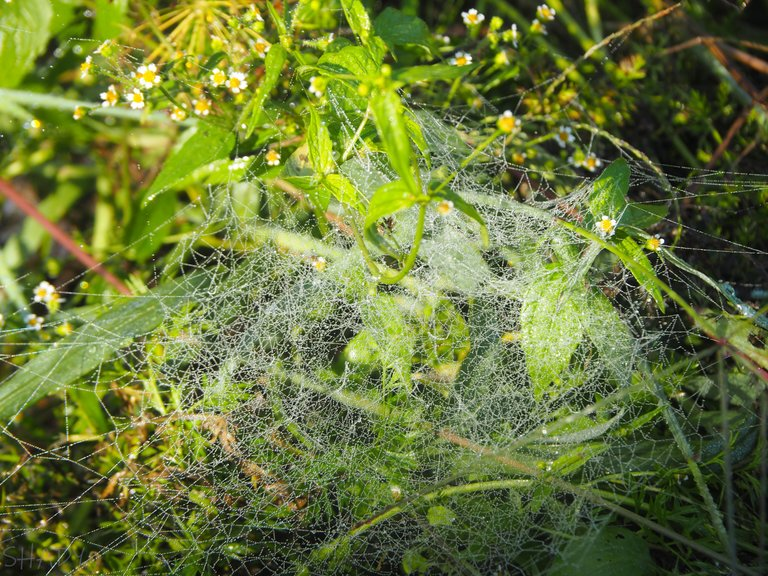 сріблясте павутиння 2.jpg