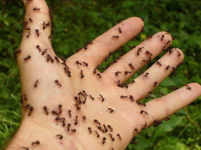 ants-4239_640.jpg