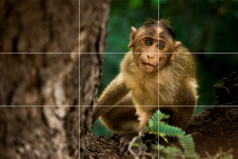 monkey grid.jpg