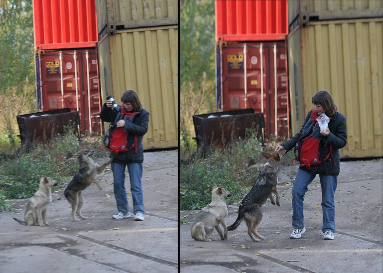 wed_7449_dogs.jpg